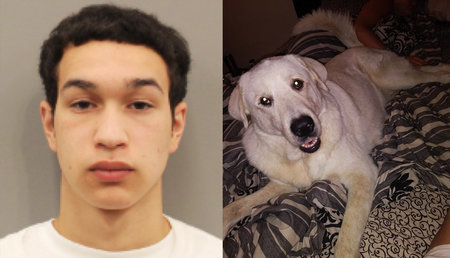 Javian Castenada, pictured left, is accused of shooting up a Houston family's birthday party on March 10 and killing their dog, Zero, pictured right.