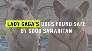 Lady Gaga's Dogs Are Found Safe By Good Samaritan