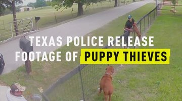 Texas Police Release Footage of Puppy Thieves
