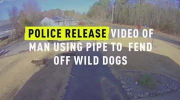 Police Release Video of Man Using Pipe To Fend Off Wild Dogs