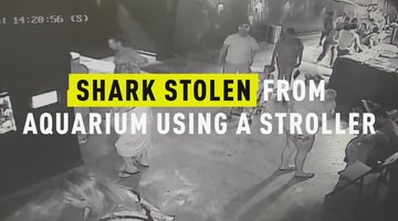 Shark Stolen from Aquarium Using a Stroller