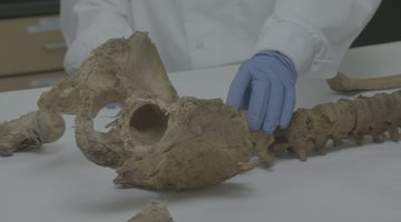 What Jane Doe's Bones Tell Us About Her Identity