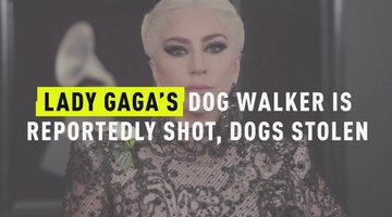 Lady Gaga's Dog Walker Is Reportedly Shot, Dogs Stolen