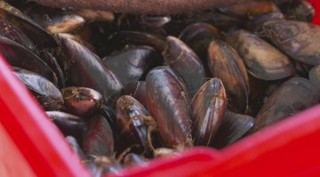 Why Mussel Diving Is So Dangerous